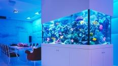 Quick Guide to Aquarium Lighting