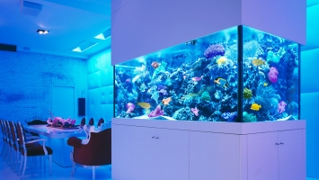 Quick Guide to Aquarium Lighting